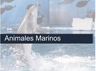 Delfin en Barcelona