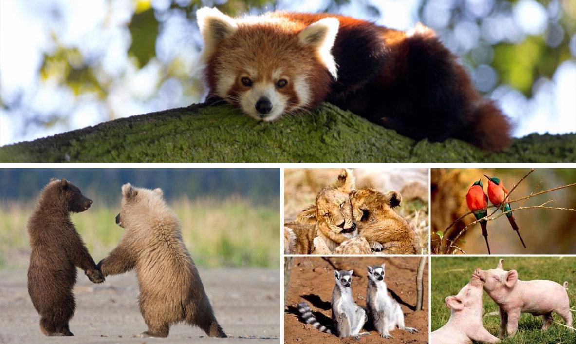 comportamiento de animales