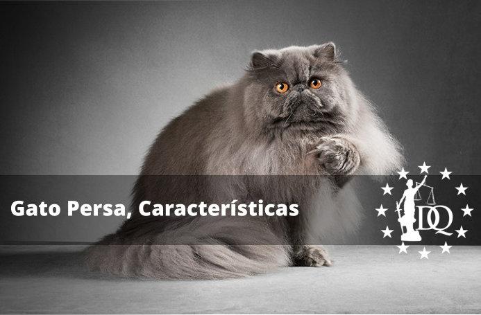 Gato Persa Características de la Raza